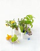 Verschiedene Kräuter in kleinen Vasen