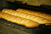 Bread rolls on a baking production line