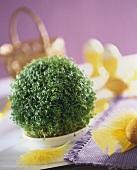 Garden cress in a small bowl