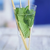 Mineral water with fresh mint