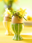 Boiled egg in eggcup with narcissus