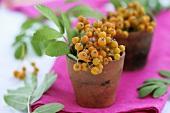 Rowan berries in small terracotta pots