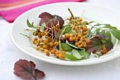 Rowan berries with leaves on a plate