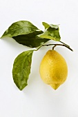 A lemon with twig and leaves