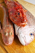 Gurnard, dentex and scorpionfish