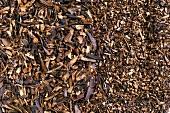 Honeybush tea (Cyclopia intermedia)