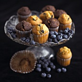 Mini chocolate and blueberry muffins