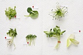 Sprouted seeds and young leafy vegetables