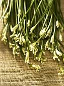 Fresh garlic chives