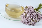 Baldriantee mit Blüten (Valeriana officinalis)