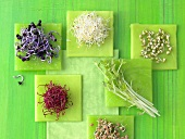 Various types of sprouts and sprouted seeds
