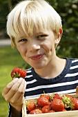 Blonder Junge mit Erdbeerkiste und angebissener Erdbeere