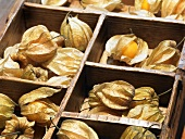 Physalis in a typesetter's case