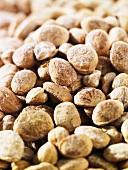 Saara Pappu (Chironji, nuts, India)