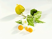 Two Cape gooseberries with stalk and flower