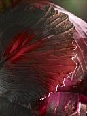 A red cabbage