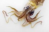 A squid head