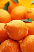 Lots of tangerines (macro zoom)
