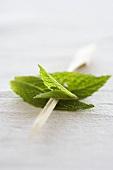 Fresh mint on wooden sticks