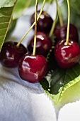 Ripe cherries (close up)