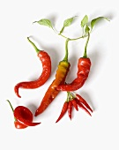 Different kinds of red chillies