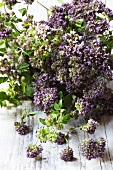 Fresh oregano with flowers