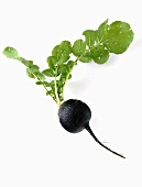 A black radish with leaves