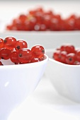 Bowls of redcurrents (close up)