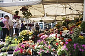 A flower stand at the market