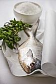 Pompano (Jack fish) on paper