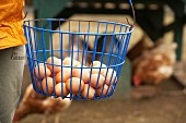 A person holding a wire basket of eggs