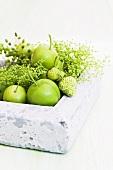 Unreifes Obst in Behälter