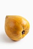Canistel (pouteria campechiana)