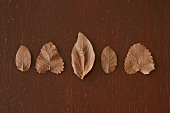 Five chocolate-coated leaves
