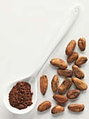 Cocoa beans and cocoa powder on a porcelain spoon