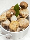 Dirty, fresh mushrooms in a ceramic pot