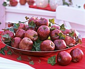Several red apples (Malus) with ivy in a dish