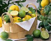 Körbchen mit Zitronen und Limetten