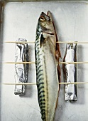 Mackerel on wooden skewers ready for grilling