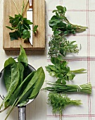 Herb still life with seven different herbs
