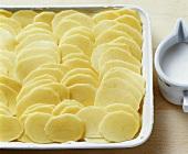 Kartoffelscheiben in eine Auflaufform geschichtet für Gratin