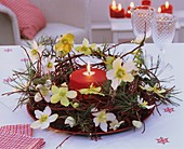 Kranz aus Hartriegel, Christrose, Efeu, Kiefer mit Kerze
