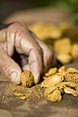 Man holding an almond in one hand, almond shells