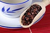 Jujube seeds (Ziziphus spinosa) with cup of tea