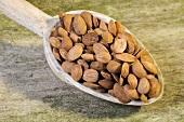 Pfirsich-Samen auf einem Holzlöffel