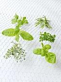 Six different herbs drying on a rack