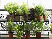 Pots of various culinary herbs on a balcony