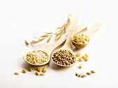 Various cereal grains on wooden spoons