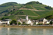 Der Rhein bei Assmannshausen, Weingut Hollenberg (Rheingau)