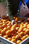 Stallholder packing oranges into a bag at a fruit stall